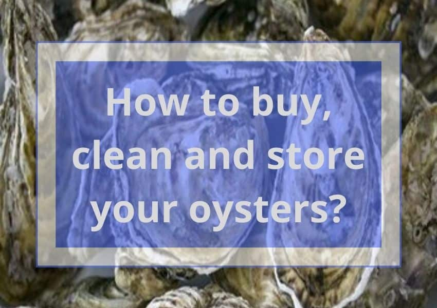 How to buy, clean and store your oysters?
