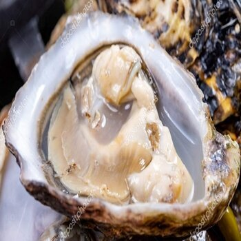 Japanese or pacific oysters