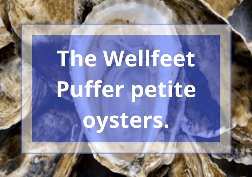 The Wellfeet Puffer petite oysters.