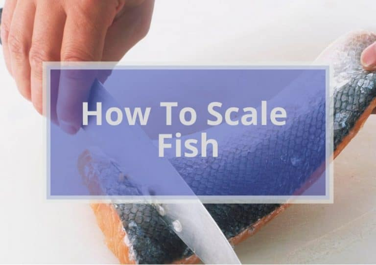 How To Scale Fish Like a Pro? | 7 Easy Steps